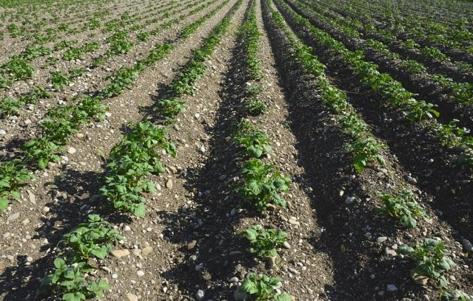 L'OPT-OUT E LE POLITICHE IN MATERIA DI OGM